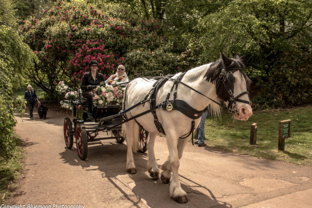 A Cockington event, the blessing of the horse